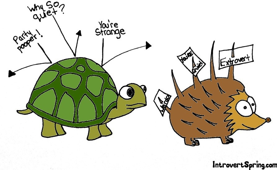Turtle vs. Porcupine