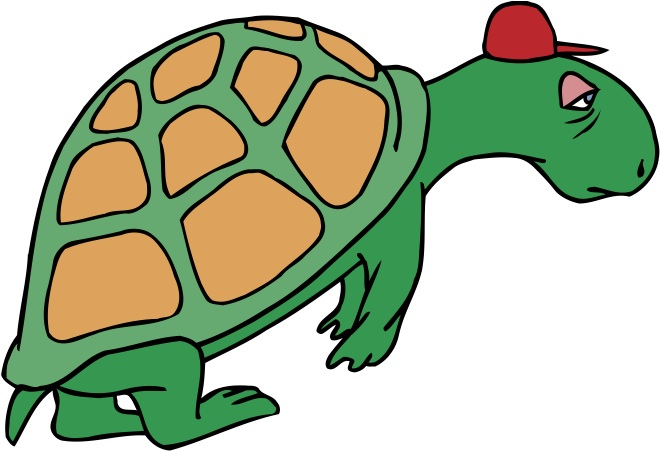 introvert turtle shell