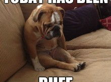 funny animal meme today has been ruff