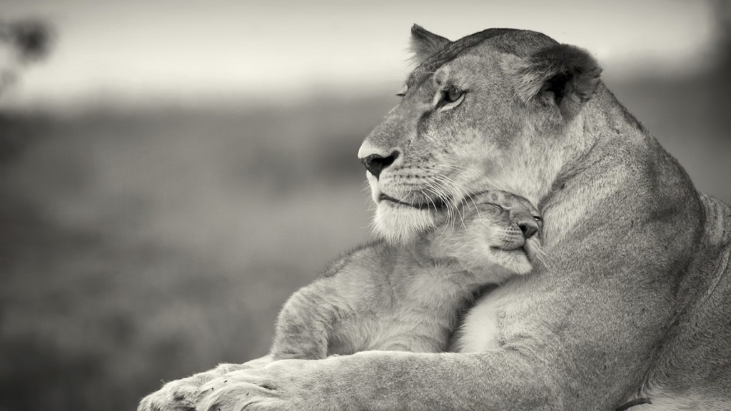 gentle lioness with baby