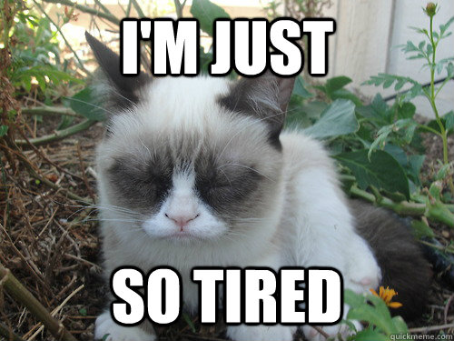 grumpy cat tired funny