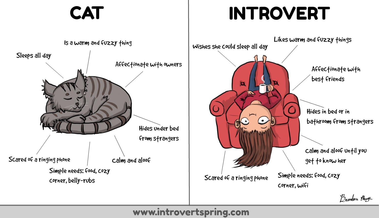 introverts are like cats
