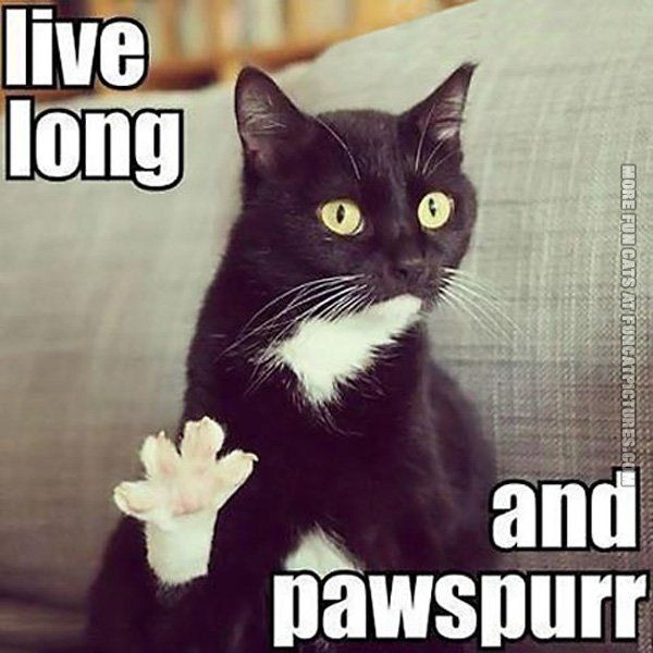 cat pun live long